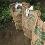 Seed for the Rafiki Farm in Tanzania